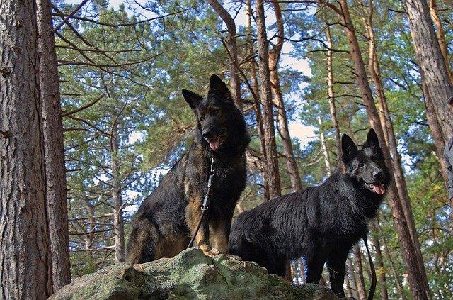 dva psy na skále