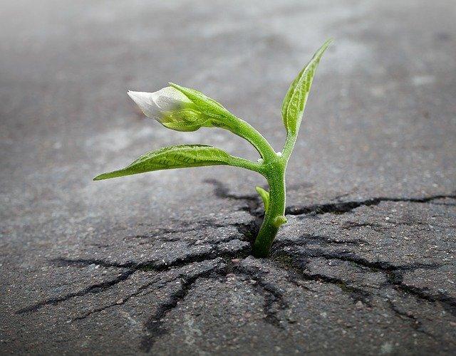 růst přes překážky